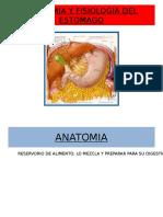 anatomiayfisiologiadelestomago-121201164947-phpapp02.pptx