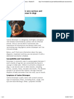 Canine Distemper – Signs, Treatment and Prevention – Banfield Pet Hospital