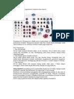Proses pembentukan granulosit