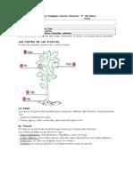 Guia Ciencias Las Plantas
