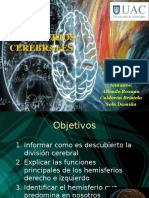 Hemisferio Cerebral Neurociencia