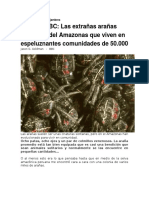 Las Extrañas Arañas Sociables Del Amazonas - BBC