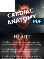 Austin Cardiology