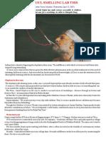 no foul smelling lab this.pdf