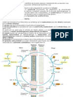 TEMA 46 biosintesis de ácidos grasos
