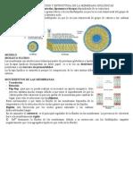 TEMA 51 membranas lipídicas