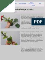 stvaranje sadnica.pdf