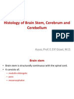 Histology of Cerebrum and Cerebellum