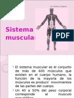 el sistema muscular
