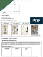 Valeriana Officinalis (Root) - AHPA Botanical Identity References Compendium