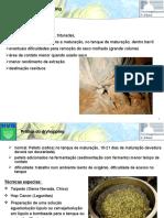 Praticas Dryhopping - Port