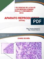 Aparato Reproductor _ Fotos(1)