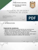 Potencial de Difusion y Potencial de Lesion
