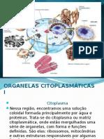 Organelas Citoplasmáticas I