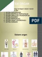 04. Sistem Organ