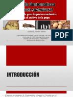 Polilla Guatemalteca