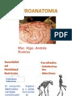 Clase 1 Generalidades Neuroanatomia Udec 2017
