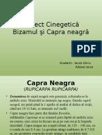 Proiect Cinegetica 2