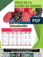 2. Manejo de La Fertirrigación en Berries (Hernandez)