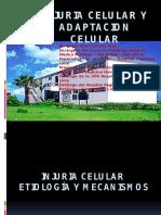 Injuria Celular y Adaptacion