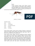 Teori Dasar Nyamuk