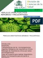 Bacilos Gran Positivos Aerobios Y Facultativos.pptx