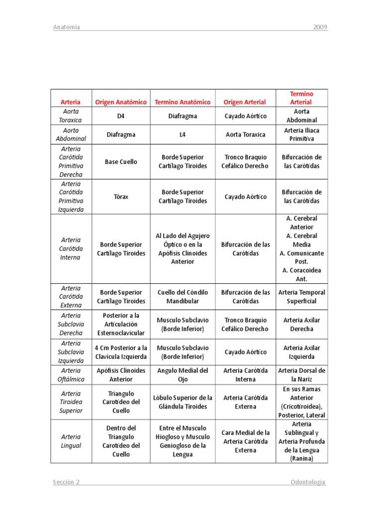 Cuadro Resumen Inserciones Arterias y Venas de La Cabeza y Cuello