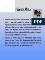 houseMouse.ppt