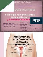 Fisiología Humana Hormonas Femeninas Katty1