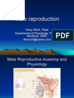 Male Repro