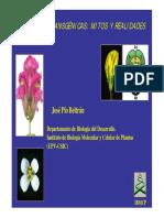 Plantas Transgenicas Mitos y Realidades