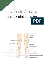 Anatomia Clinica a Membrului Inferior 2015