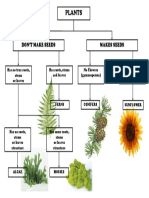 Plant Classification Chart