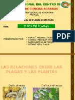 Tipos de Plagas - 2016