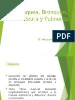 Traquea, Bronquios, Pleura y Pulmones, Dr. Del Nogal