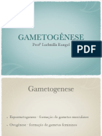 Gametogenese