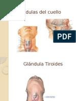 Glándulas Del Cuello, Prof. Pedro Yepez