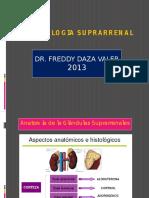 1. FISIOLOGIA SUPRARRENAL