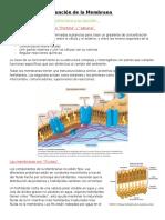 """Resumen Campbell """"Estructura y Funcion de La MP"""""""
