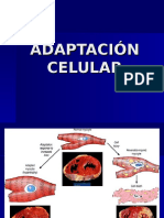 Adapt Ac ion Celular