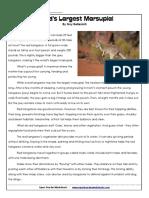 6th-red-kangaroo_KANGA.pdf