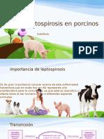 Leptospirosis en Porcinos