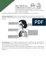 El Aparato Respiratorio Tiene Como Función Tomar Oxígeno Del Aire y Llevarlo a La Sangre 4 B