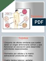 tejidos-ppt-5