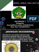 Jaringan Eksodermis, Gabus, Dan Lentisel