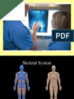 Skeletal System Phyanalab