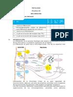 Practica 3 Inflamación (1)
