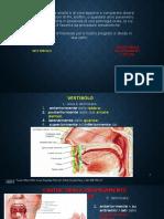 Presentazione gruppo ortodonzia corretta.pptx
