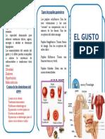ITF-TRIPTICO.doc