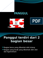 4. Panggul